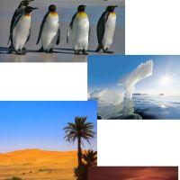 Es_gibt_bald_neue_Wüstenvögel